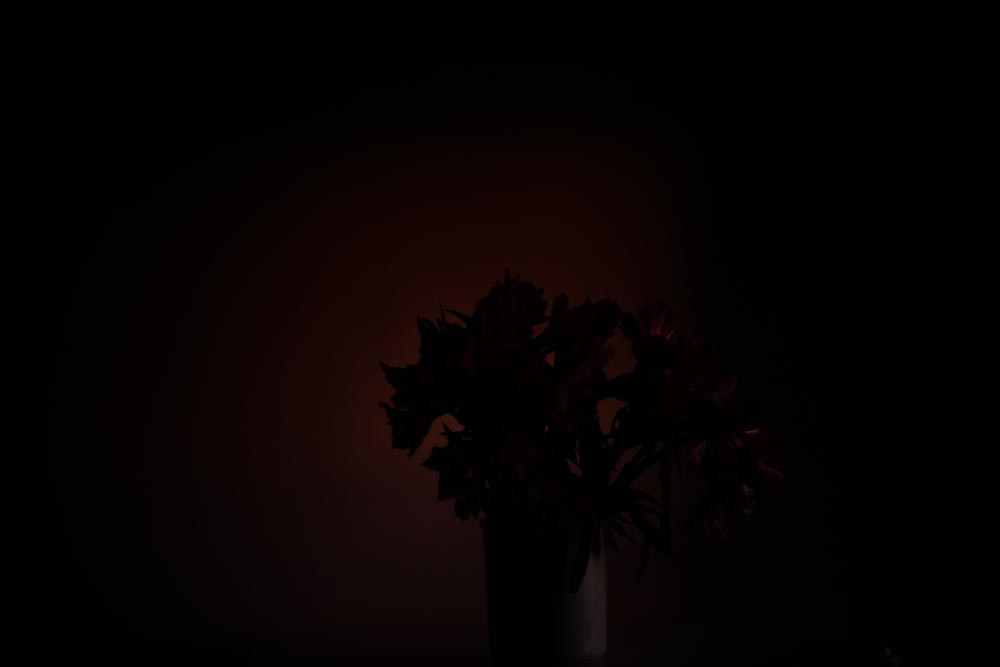 Snapchat as New Artistic Medium: Fine Art Photography Project Exploring Memory, Intimacy, Life and Death, Flowers, Steve Giovinco