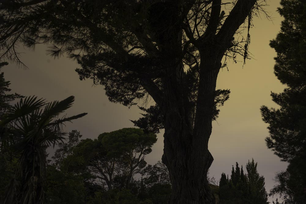 I Photographed at a 19th Century French Chateau at Night. This is What it Looks Like--Tree