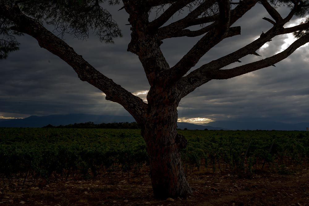 Artist-in-Residence, Rhapsodic Night Landscape Photographs and Exhibition in France: Lone Tree