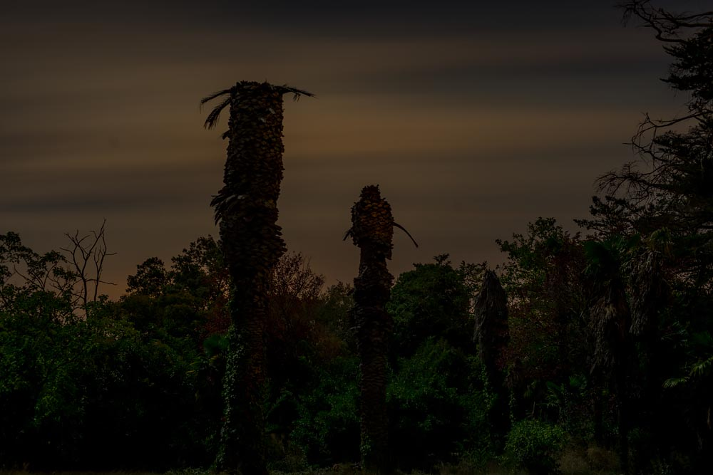 Artist-in-Residence, Rhapsodic Night Landscape Photographs and Exhibition in France: Palms