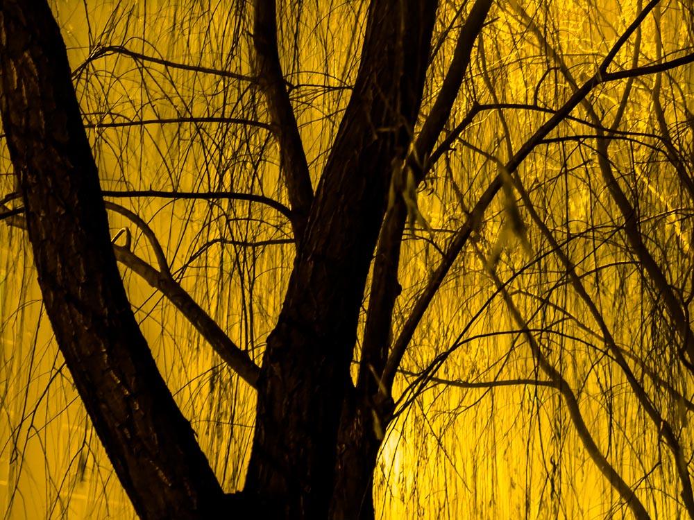 Lyrical nightlandscapes at twilight, New Hope, tree in yellow #ArtPhotography @SteveGiovinco