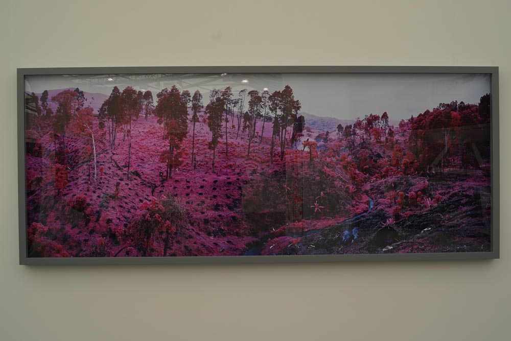 Frieze New York 2015 Photography: Few Classics, Mostly New, Richard Mosse, Jack Shainman Gallery