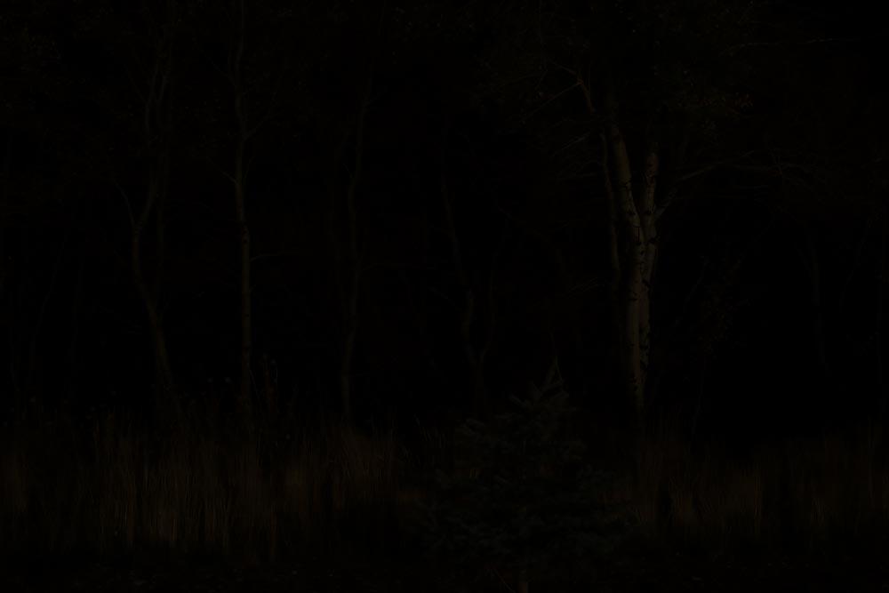Twilight at the Edge of the World: Wyoming Photographed, Night Wood @SteveGiovinco