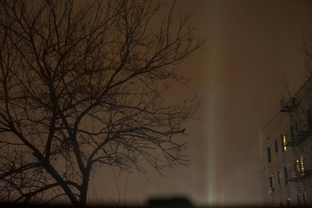 Fine art photography commission (night light/tree) for Monegraph, Steve Giovinco