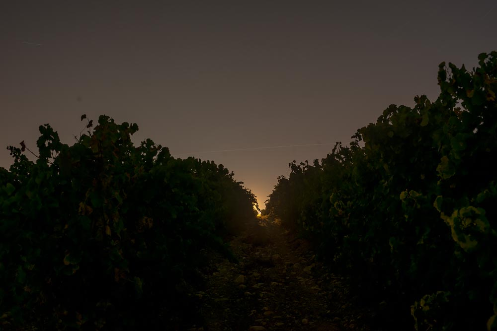 Artist-in-Residence, Rhapsodic Night Landscape Photographs and Exhibition in France, Walking in Fear