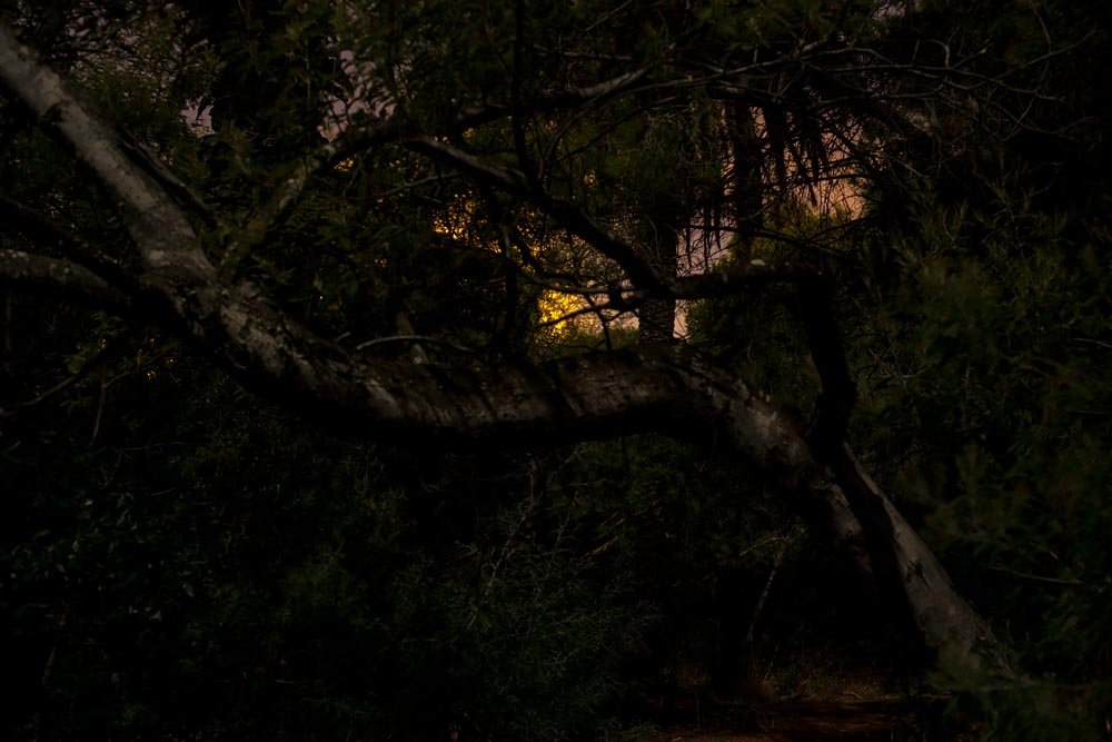 Artist-in-Residence, Rhapsodic Night Landscape Photographs and Exhibition in France: Trees Yellow Light