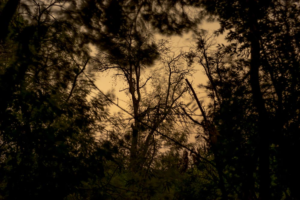 Artist-in-Residence, Rhapsodic Night Landscape Photographs and Exhibition in France: Trees Yellow